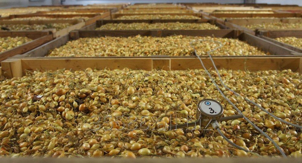 Kupić Sprzedaż cebuli dymki, odmiany:Efekt, Sturon, Scarlet (czewrona), Snowball (biała).