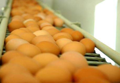 Kupić Pakowanie jaj