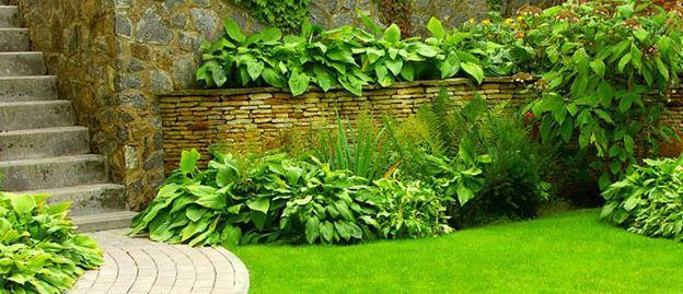 Kupić Rośliny ogrodowe liściaste