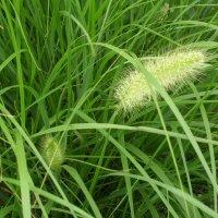 Kupić Trawy ozdobne