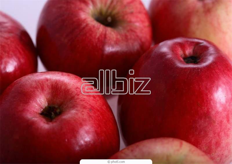 Kupić Jabłka różnych odmian