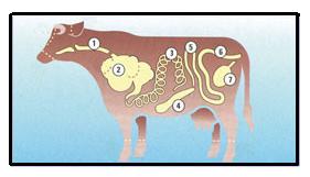 Kupić Jelita wołowe stosowane w produkcji kiełbas