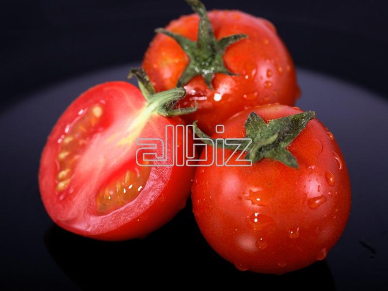 Kupić Świeże pomidory z Polski