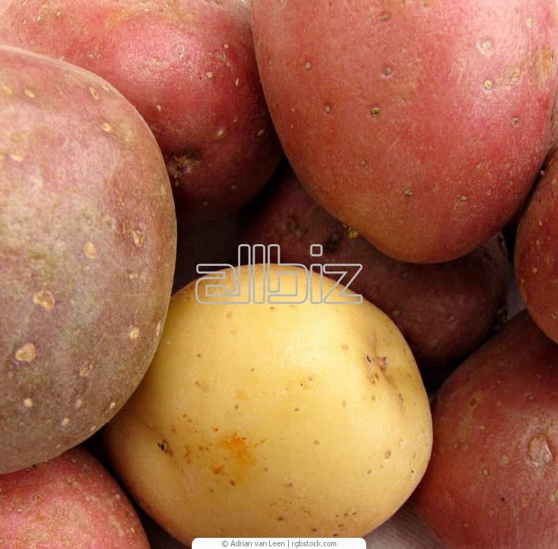 Kupić Ziemniaki czerwone