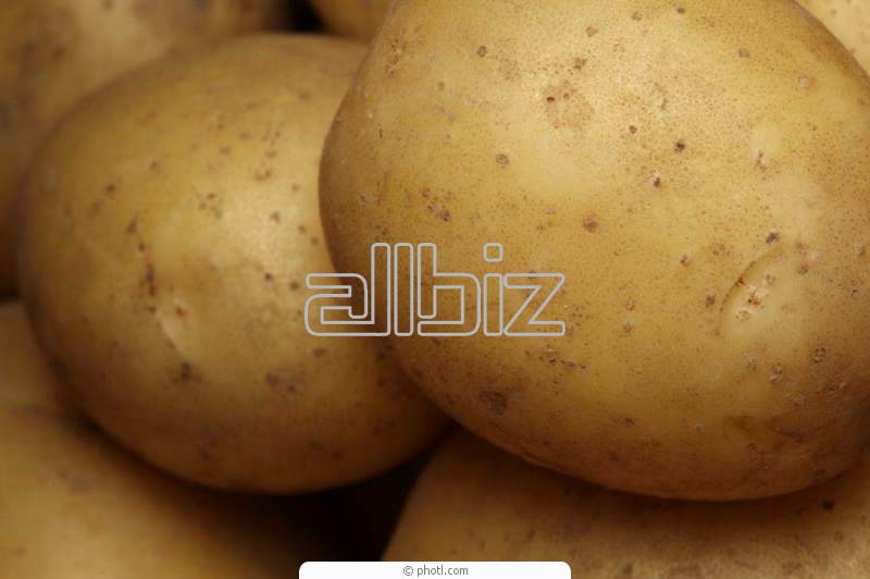 Kupić Ziemniaki na eksport