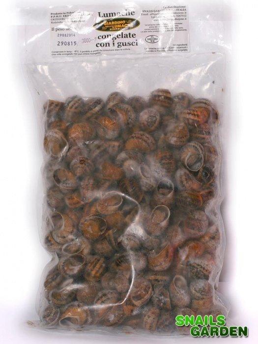 Kupić Ślimaki mrożone Helix aspersa muller
