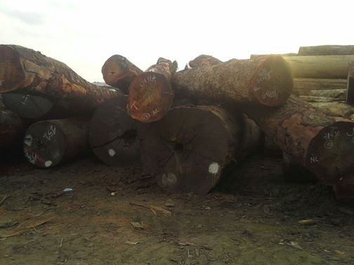 Kupić Drewno tropikalne Afryka Zachodnia