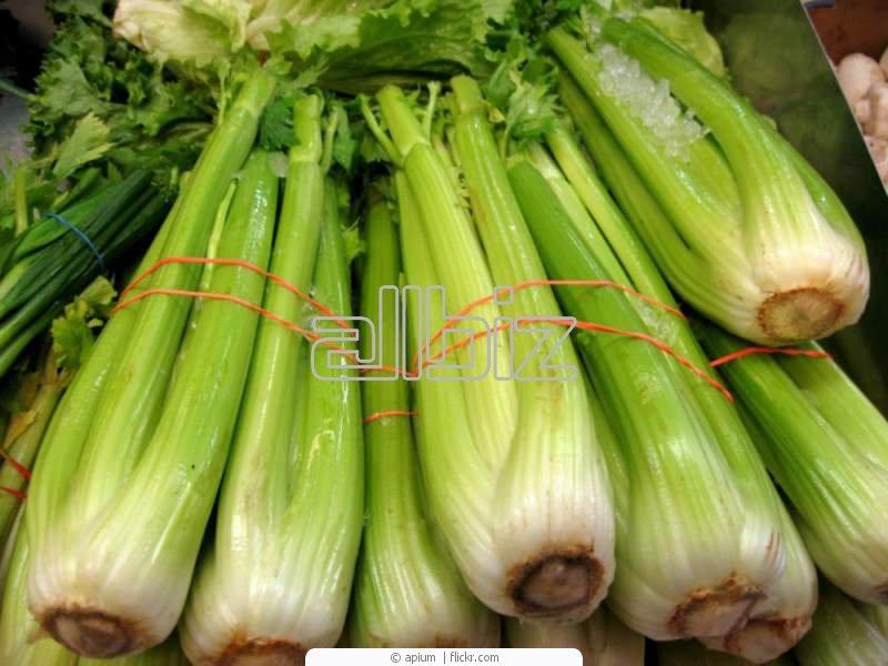 Kupić Seler, selery świeże na eksport, selery pakowane w siatki na zamówienie, warzywa na eksport