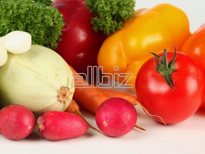 Kupić Warzywa polskie świeże, warzywa pakowane na zamówienie, marchew, brokuły, kapusta biała na eksport