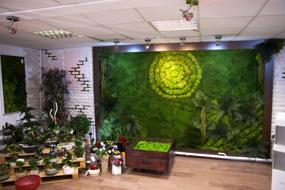 Kupić Zielone ściany Everlasting flowers