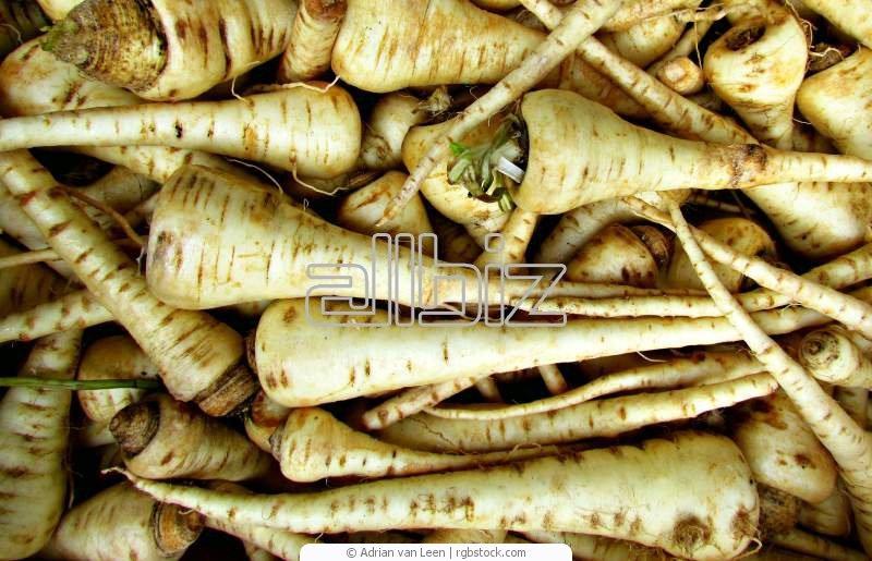 Kupić Warzywa świeże na zamówienie, pasternak świeży na eksport, kapusta na sprzedaż, owoce polskie na eksport