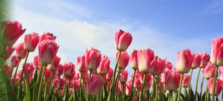 Kupić Kwiaty żywe cięte