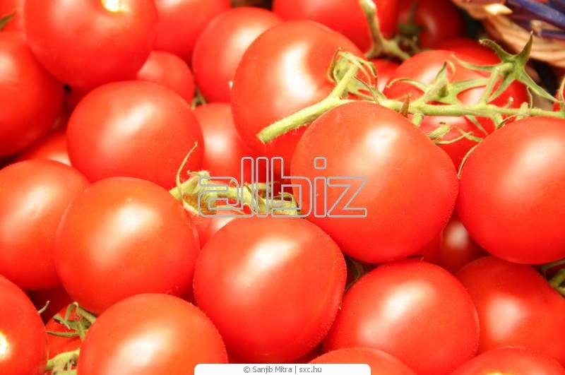 Kupić Pomidory pakowane siatki, pomidory polskie na zamówienie, pomidory pakowane w pudełka na eksport