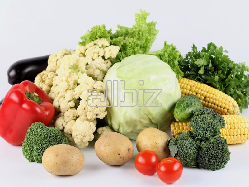 Kupić Eksport świeżych warzyw.