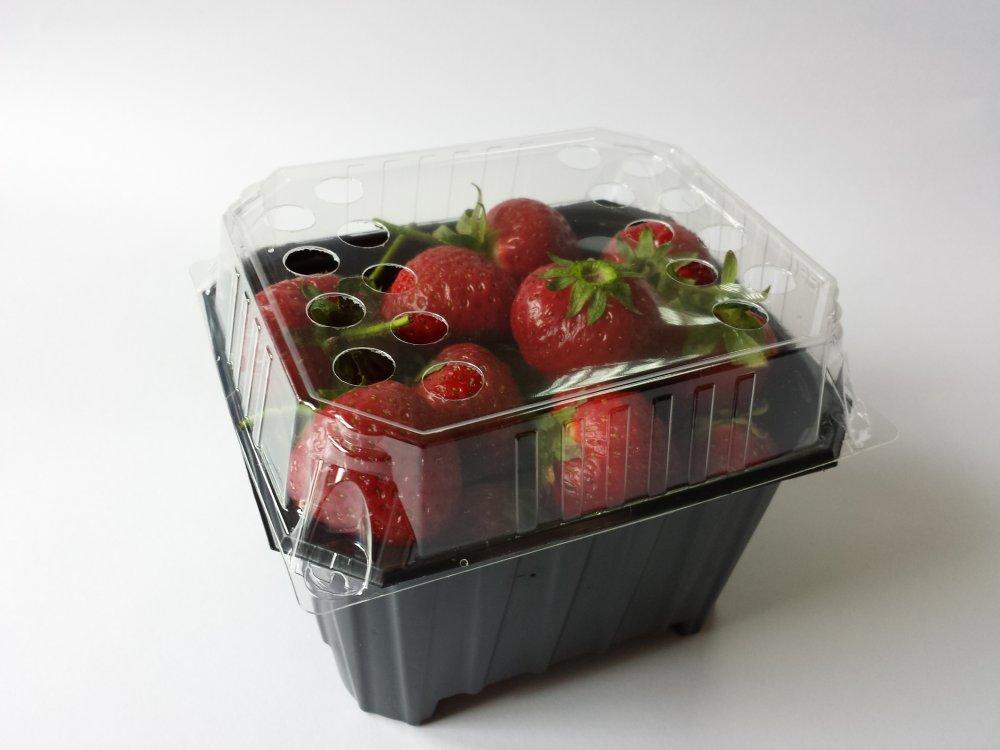 Kupić Pojemniki na owoce i grzyby