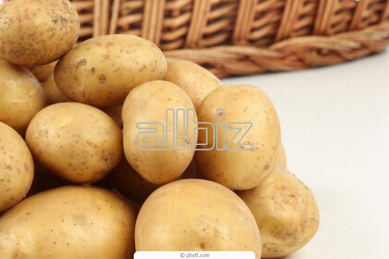 Kupić Ziemniaki z Polski
