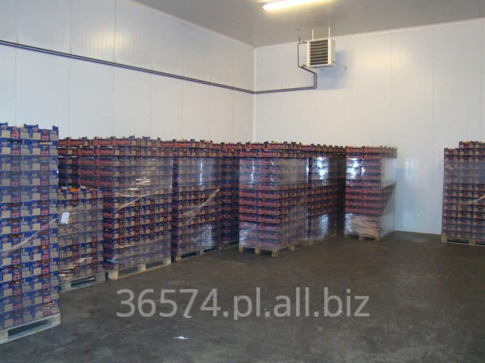 Kupić Świeży, dorodny, produkowany w Polsce pomidor szklarniowy