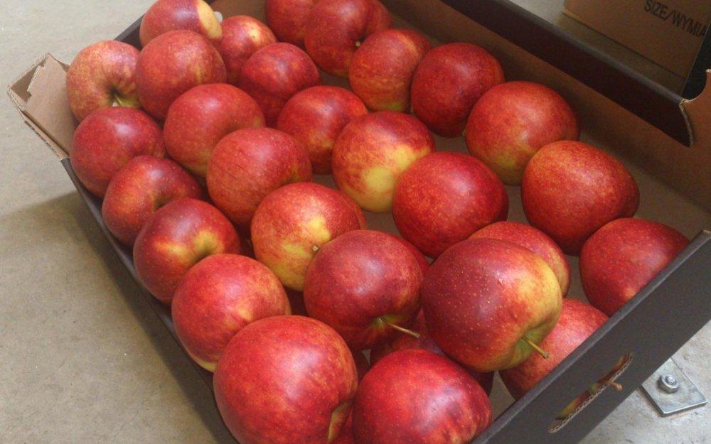 Kupić Polskie Jabłka