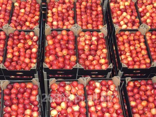 Kupić Gloster, słodko-kwaśne i bardzo aromatyczne jabłka dostępne przez całą zimę.