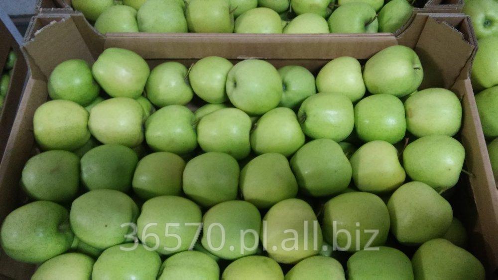 Kupić Golden Delicious (zielony)