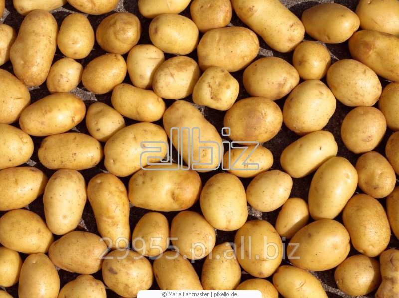 Ziemniaki bardzo wczesne