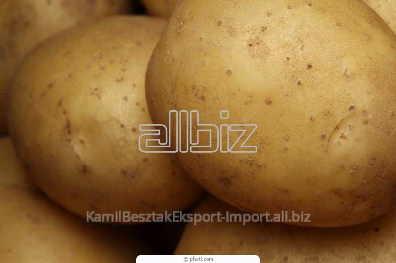Ziemniaki stołowe