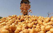 Ziemniaki chipsowe