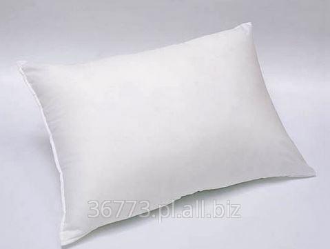 Kupić Poduszka 50x70