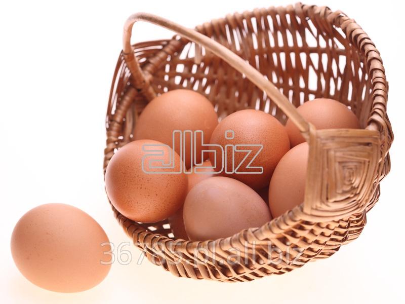 Kupić Kurze jaja, rozmiar M.