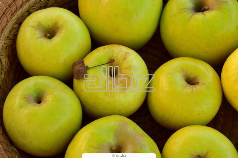 *Jabłka* od OMEGA