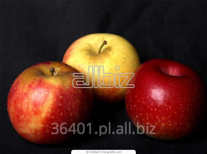 Jabłka Florina