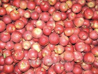 Jabłka RED PRINCE