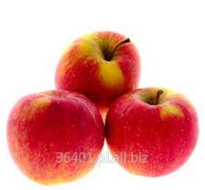 Jabłka CHAMPION