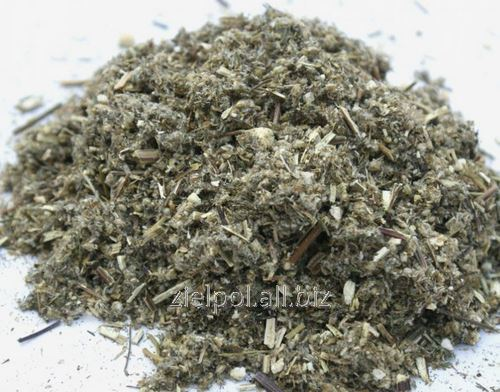 Bylica pospolita ziele, Artemisia Vulgaris Herba, hurtowa sprzedaż.
