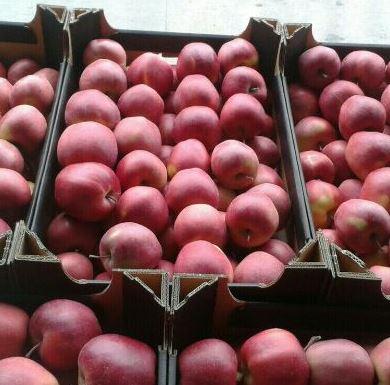 Jabłka JONAPRINCE