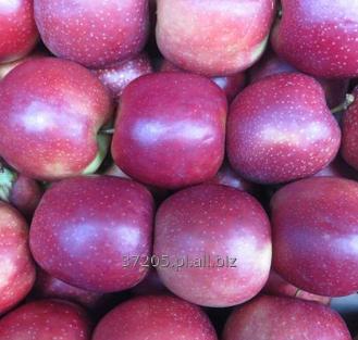 Kupić Świeże jabłka prosto z drzewa od sadownika w odmianie Red Jonaprince.