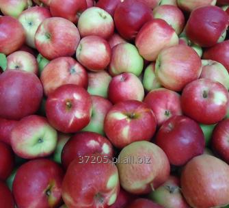 Kupić Jabłko Ligol sprzedaż od sadownika.
