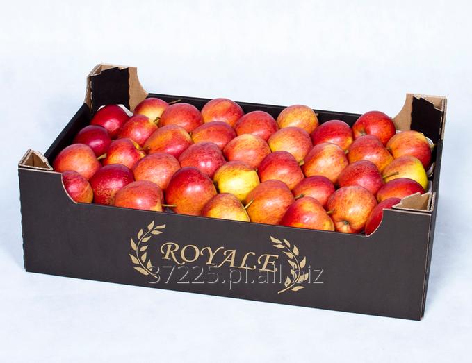 Kupić Polskie jabłka w różnych odmianach, oferujemy jabłka wczesne i późne.