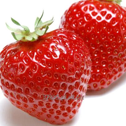 Kupić Świeże i soczyste owoce truskawki z polskich upraw.