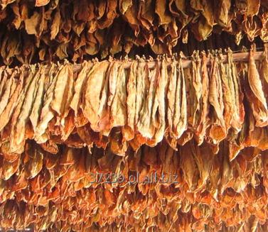 Kupić Technologia prasy przetwarzającej susz dla firmy z branży tytoniowej.