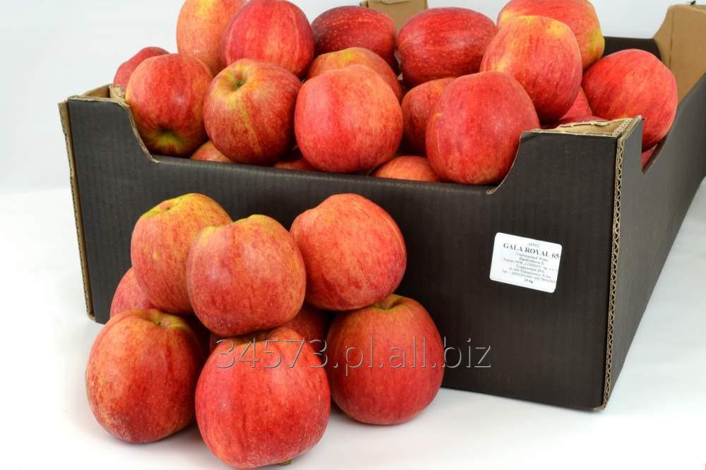 Kupić Jabłka Gala Royal, aromatyczny, kruchy i słodki w smaku miąższ.