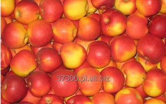 Kupić Jabłka Champion, charakteryzujące się słodkim, delikatnie kwaskowatym smakiem, o gruszkowym posmaku.