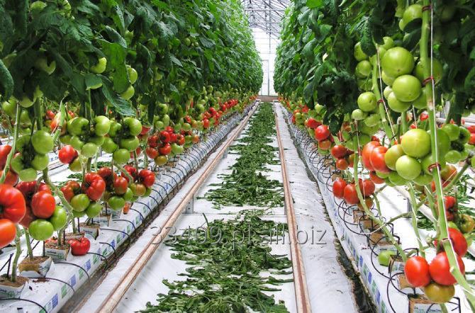 Kupić Organizmy pożyteczne w uprawach roślin entomofagi i preparaty do ochrony biologicznej.
