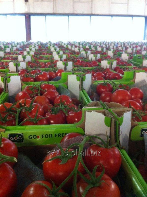 Kupić Pomidory , Pomidory CHERRY