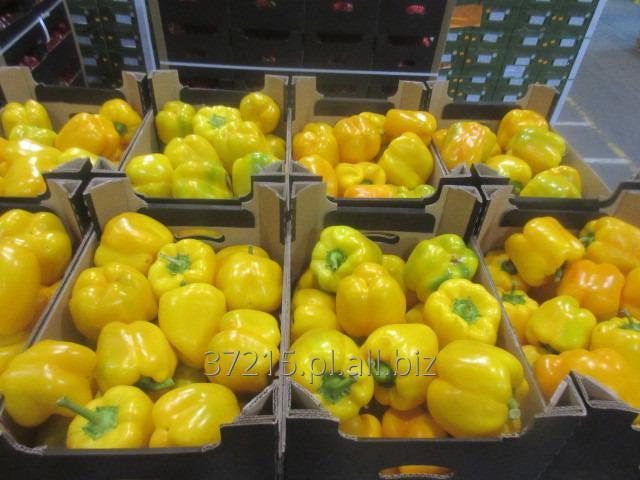 Kupić Papryka ( Hiszpan ) (czerwona,żółta,zielona)