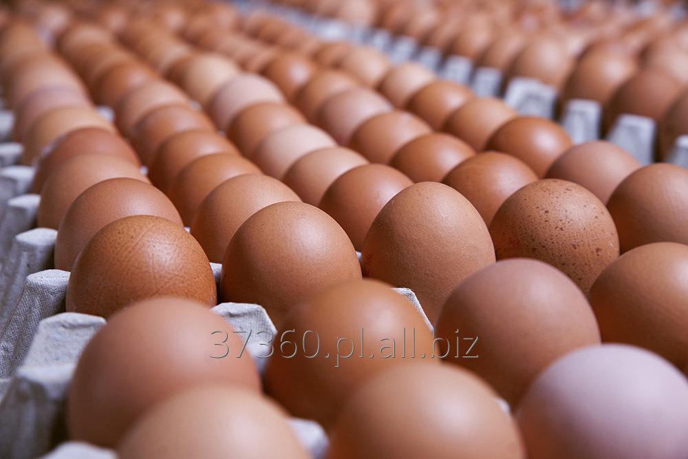 Kupić Jaja świeże w opakowaniach transportowych