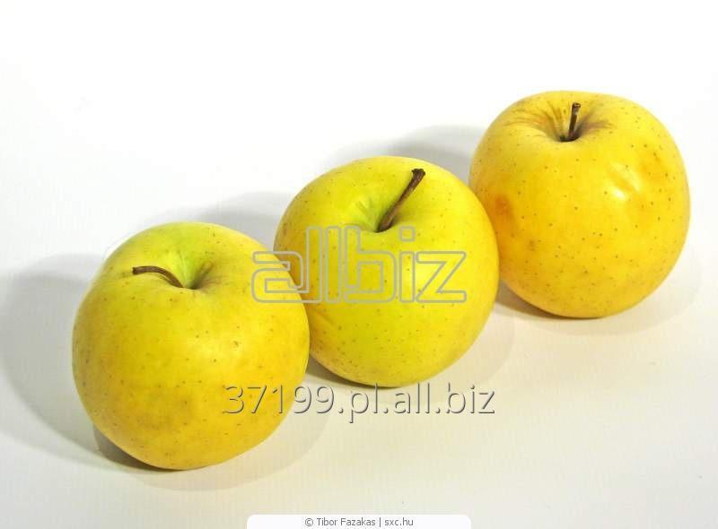 Kupić Jabłka Golden 65+, 70+/ 13 kg