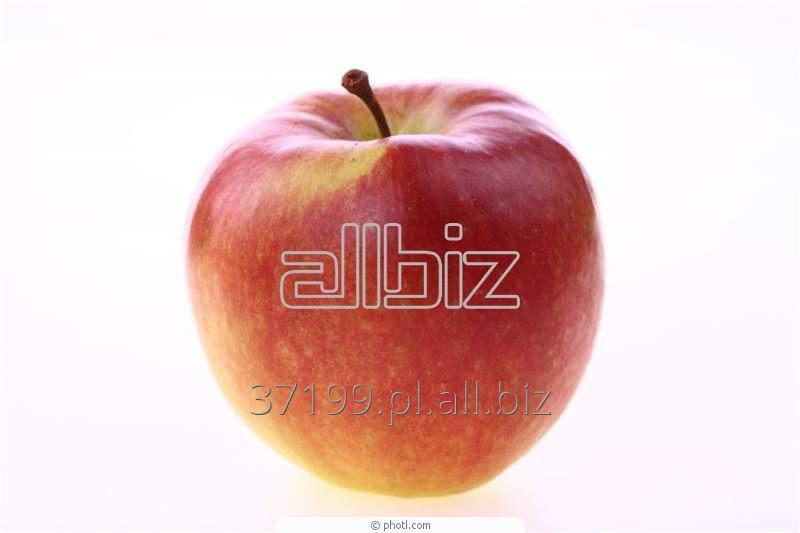 Kupić Jabłka idared 70+ / 13 kg