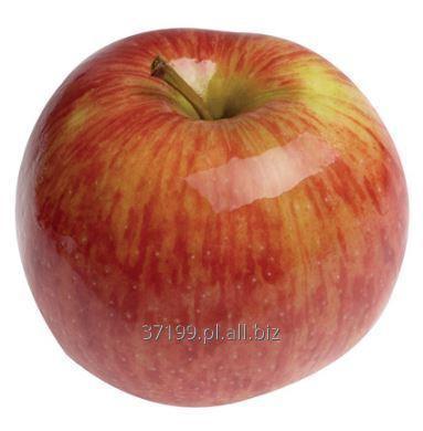 Kupić Jabłka Jonagored 70+ / 13 kg