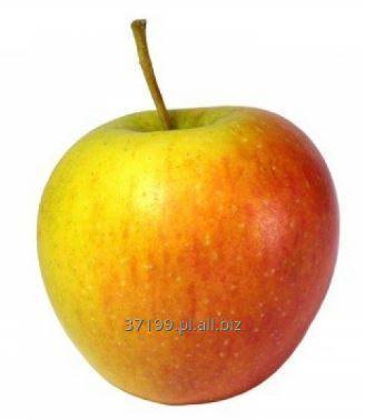 Kupić Jabłka świeże Szampion 70+/ 13 kg